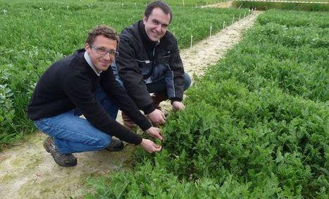 Euralis : des couverts agricoles pour mieux protéger les terres | Agriculture en Dordogne | Scoop.it