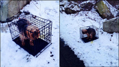 Dog in Cage Found Abandoned on Snowy Road | Nature Animals humankind | Scoop.it