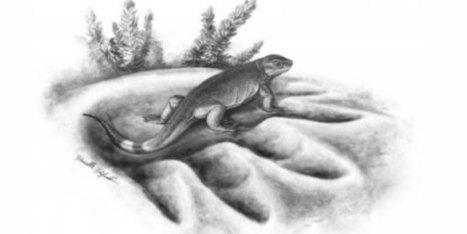 Oudste voorouder van de plantenetende landdieren ontdekt | KAP-VanRoyBrian | Scoop.it