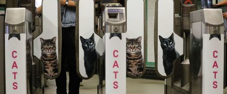 Ads in London Underground Station Replaced With Cat Photos | Notebook | Scoop.it