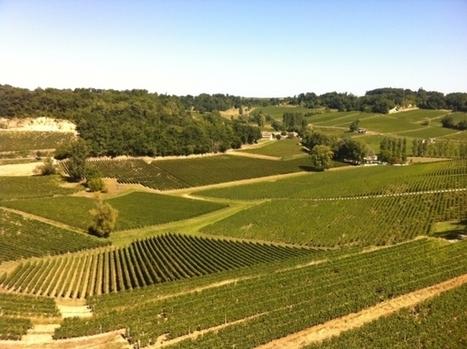 France Bleu | Viticulture : l'usage des pesticides progresse encore en Gironde | Le vin quotidien | Scoop.it