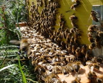 Territoire de Belfort : les maires sollicités pour signer un arrêté interdisant l'utilisation des néonicotinoïdes à proximité des ruches | Apiculture, agriculture et environnement | Scoop.it