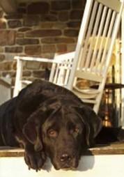 That dog won't hunt | 48 Days LLC | Dan Miller | The Wise Leader | Scoop.it