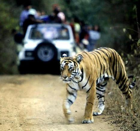 Golden Triangle and Corbett Tour (09 Nights / 10 Days) | Golden Triangle Tours | Scoop.it