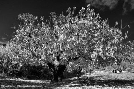Le temps des cerises de MoterCalo - Aiguebrun PhotoBlog - le Luberon | The Blog's Revue by OlivierSC | Scoop.it