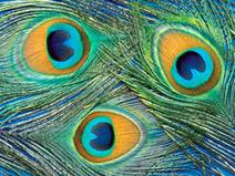 Color Theory: Color Schemes | High School ELA- MI | Scoop.it