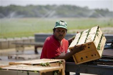 Locally-grown foods look to bigger business | Sustainable Food Systems | Scoop.it