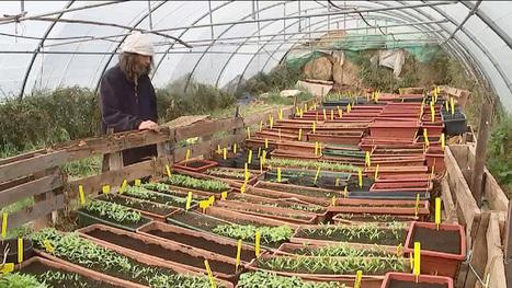 Il produit des tomates bios, sans engrais et sans eau | Local et solidaire | Scoop.it