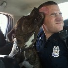 Officer Responds to Dangerous Dog Call, Comes Home with New Best Friend | Pet News | Scoop.it