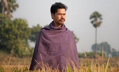 India's rice revolution | Ethical Consumption and Public Sustainable Procurement | Scoop.it