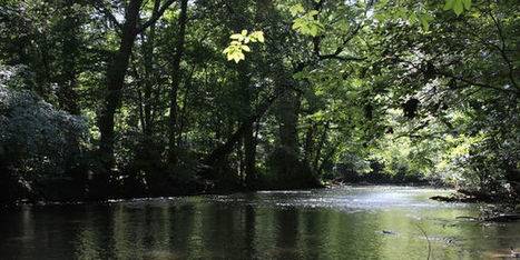 Petition: Save the Little Cahaba | ~Environment,wildlife,children,human rights and global issues~ | Scoop.it