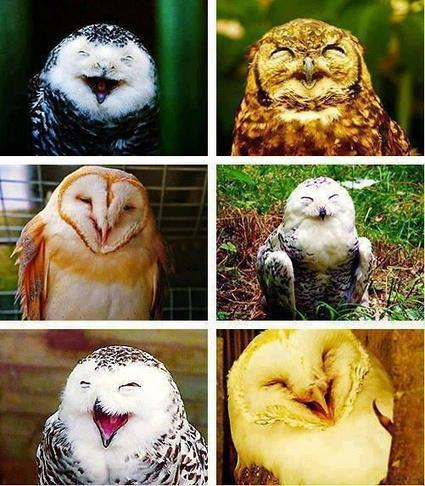 Twitter / Fascinatingpics: Happy owls! http://t.co/HTzT4opfam | Animal rights | Scoop.it