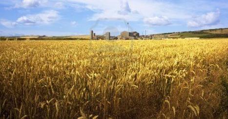 Grain monopolys tighten grip, food prices increase | Macro Economics | Scoop.it