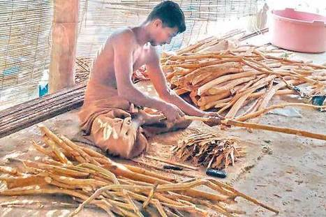 US research study spells boom for Lanka's cinnamon industry | Features | Erba Volant - Applied Plant Science | Scoop.it
