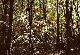 Deciduous Forest Biome | Temperate Forest | Scoop.it