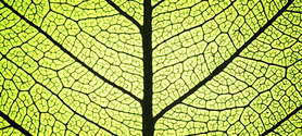 Le biomimétisme, à l'origine des technologies de demain ?   Efficycle   Scoop.it