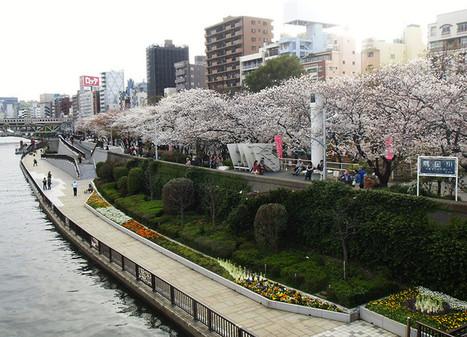 Sakura Viewing 2014: Asakusa & Sumida River | JapanxHunter | Tokyo Japan Lifestyle, Food & Drinks! | Scoop.it
