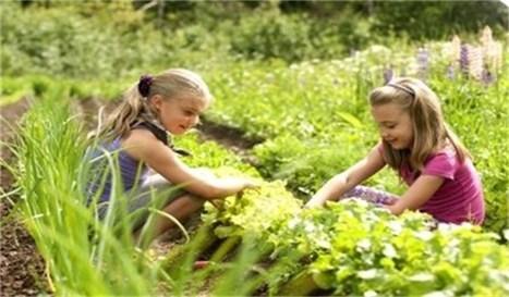 Essen krijgt een samentuin - Gva.be   Velt - Ecologisch leven en tuinieren   Scoop.it