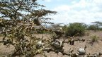 End to epic African flora survey   Natura educa   Scoop.it