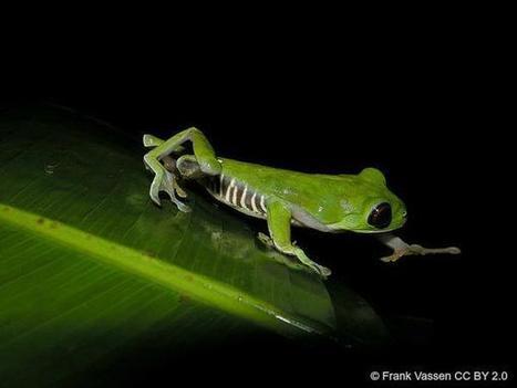 IUCN on Twitter | Agua | Scoop.it