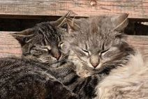 How to Introduce Your New Cat to Another Cat - And My Cat | A Cat's Life | Scoop.it
