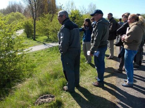 Coupler la gestion différenciée avec un suivi de la biodiversité : le pari gagnant de communes du Nord-Pas-de-Calais   Variétés entomologiques   Scoop.it