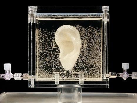 Diemut Strebe:  Sugababe (Vincent van Gogh's ear)   Art Installations, Sculpture, Contemporary Art   Scoop.it