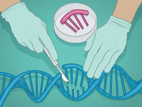 From curing diseases to making designer babies, human gene editing is coming | World Events and Interesting Articles | Scoop.it