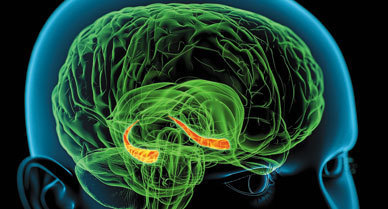 How Our Brains Make Memories | Cognitive Science | Scoop.it