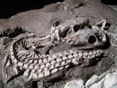 Mammal Evolution Took No Great Leap, Study Suggests   Bio Means Life   Scoop.it