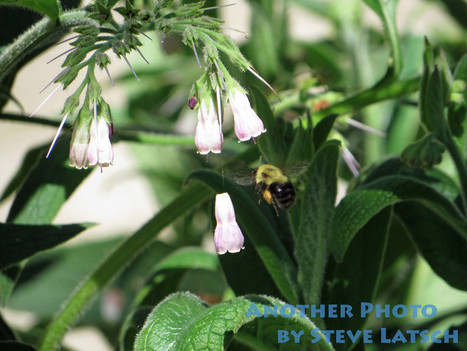 Bumblebee on a Mission | Travel Musings and Photography | Scoop.it