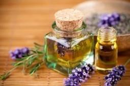 Huiles essentielles lavande | Guide aromathérapie | Scoop.it