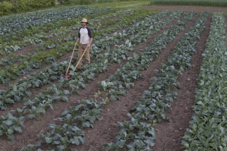 Ce jardinier réinvente l'agriculture sur moins d'un hectare | Les colocs du jardin | Scoop.it