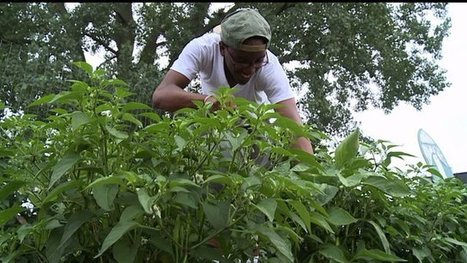 Urban crops inspire change in Indianapolis youth | Fox 59 | Community | Scoop.it