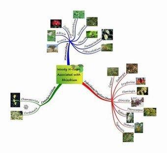 Leguminous Nitrogen-Fixing Trees | Think Like a Permaculturist | Scoop.it