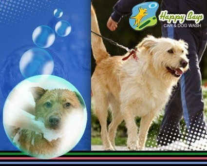 Clean Your Pet with the Best Wash Services | Know about Your Car Wash Services in Calgary from Happy Bays | Scoop.it