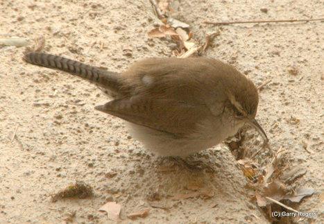 350 New Bird Species; More Than 25% Threatened | GarryRogers NatCon News | Scoop.it
