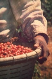 What's So Hot About Costa Rica Coffee? | costaricalearn | Scoop.it