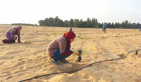 Faire pousser une forêt dans le désert : l'Égypte l'a fait !   Confidences Canopéennes   Scoop.it