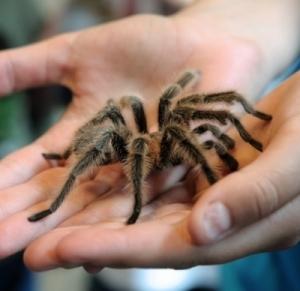 Disgust may be key to treating phobias. | BlablaDoctor | Scoop.it