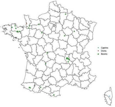 abc-éleveurs | dossier élevage : Surveillance de l'infection congénitale par le virus Schmallenberg | Schmallenberg virus | Scoop.it