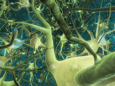 Neuroplasticity: enormous implications for anyone who has been labeled with a psychiatric illness | Neurogenesis and education | Scoop.it