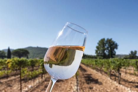 Tendance rosé – Moins d'alcool, plus de clarté   Actualité du monde de la gastronomie   Scoop.it