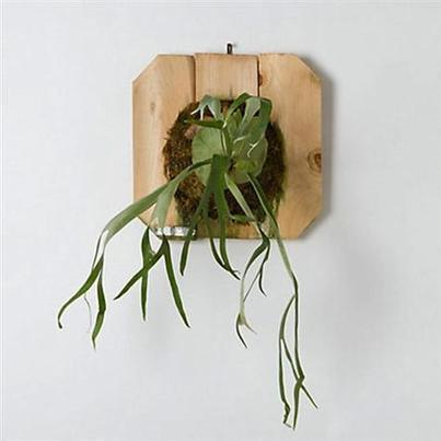 A Botanical Magic Trick: Air Plants and Aeriums | Botany Whimsy | Scoop.it