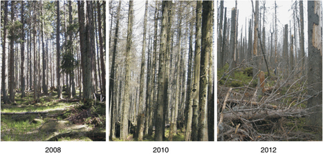 When the forest dies: the response of forest soil fungi to a bark beetle-induced tree dieback | Gardening, Native Plants, Gulf Coast Ecosystems | Scoop.it