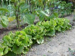 Démarrer un potager : il est temps de préparer le sol pour le printemps | Immobilier | Scoop.it