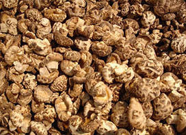 Gourmet Mushrooms Recycle Waste   Scientific Computing   CALS in the News   Scoop.it