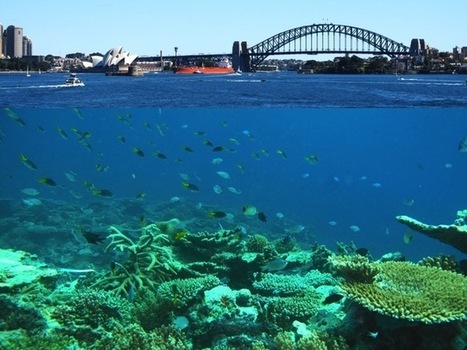 Sydney's waters could be tropical in decades, here's the bad news... | Geography in the classroom | Scoop.it