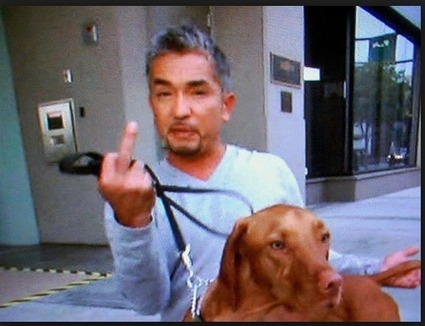 The Damage of the Dog Whisperer: A scientific critique of Cesar Millan's theories and training methods | Archivance - Miscellanées | Scoop.it