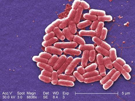 Killing a bacterial killer | Ms. Verret - Student Info | Scoop.it